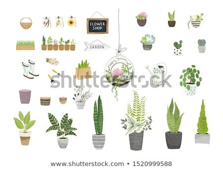 Vector set  flowers houseplant Stock photo © Olena