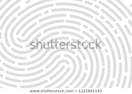 Fingerprint Unique Finger Pattern Poster Vector Stock photo © robuart
