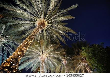 Karácsonyfa pálmafák díszített trópusi ünnep helyszín Stock fotó © galitskaya