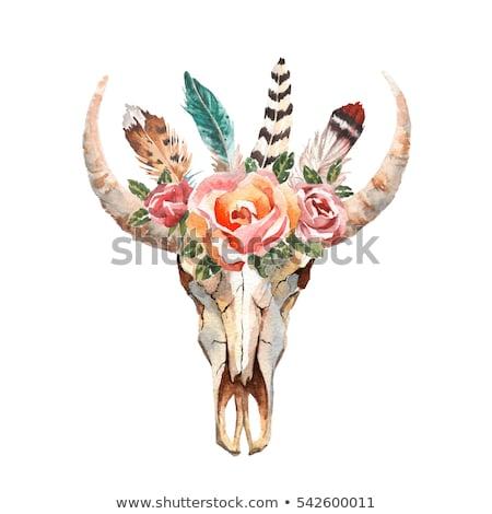 богемский стиль бык череп плакат набор Сток-фото © marish