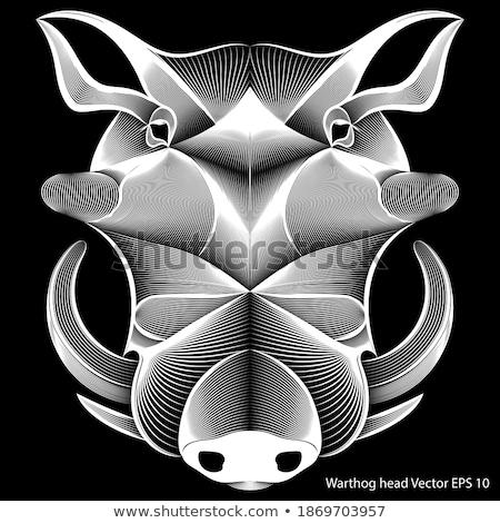 Razorback Doodle Art Black and White Stock photo © patrimonio