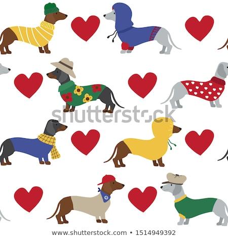 Sevimli daksund köpek yavrusu komik kâğıt şapka Stok fotoğraf © vauvau
