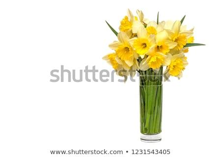 Stockfoto: Boeket · narcissen · bloemen · Blauw · exemplaar · ruimte · voorjaar