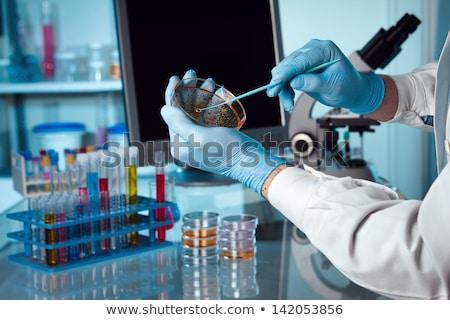 laboratory science test tube bacteria petri dish Stock photo © yupiramos
