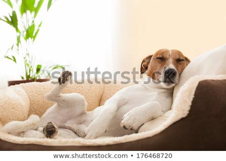 Have a Headache on living room Stock photo © eddows_arunothai