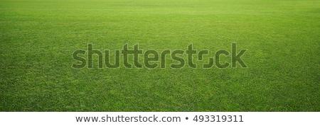 Green grass lawn Stock photo © naumoid
