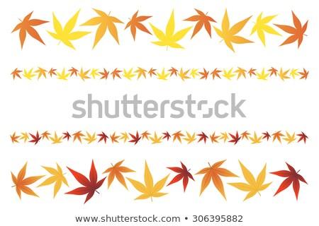 japanese acer leaves Stock photo © leeavison