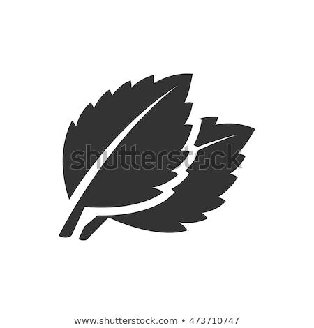 málna · bazsalikom · levelek · friss · természetes · desszert - stock fotó © lunamarina