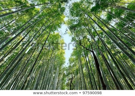 Dinâmico bambu floresta ver tropical sul Foto stock © smithore