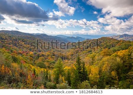 ősz · juhar · levelek · ösvény · színes · föld - stock fotó © joyr