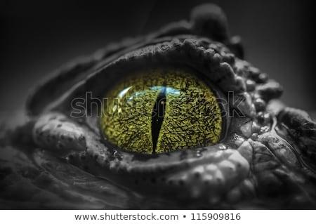 Krokodil közelkép szem fej pihen amerikai Stock fotó © OleksandrO
