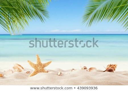 Deniz manzara palmiye yaprağı ön plan güzel mavi Stok fotoğraf © Mikko