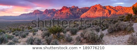 red rock canyon panorama nevada stock photo © rigucci