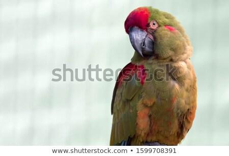 Piros föld közelkép természet narancs madár Stock fotó © chris2766