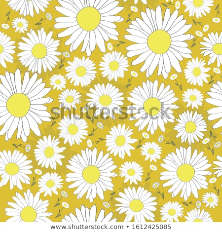 Sarı beyaz papatya çiçek ışık Stok fotoğraf © tang90246