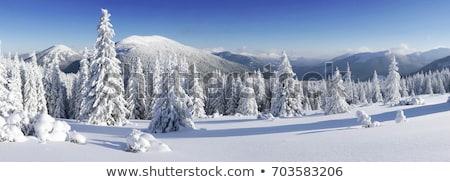 arbres · hiver · paysage · arbre · de · pin · montagne · vallée - photo stock © Kotenko