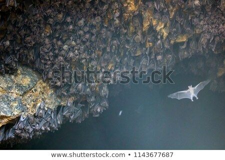 colony of bats at goa lawah bat cave temple in bali stock photo © pzaxe
