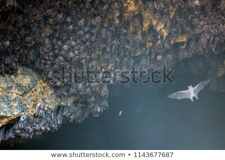 Colony of Bats at Goa Lawah Bat Cave Temple in Bali Stock photo © pzaxe