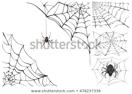 Web and black poisonous spider. Set Halloween accessory Stock photo © orensila