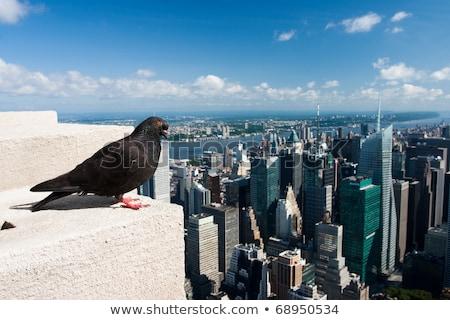 Güvercin gökyüzü şehir mavi seyahat kentsel Stok fotoğraf © CaptureLight
