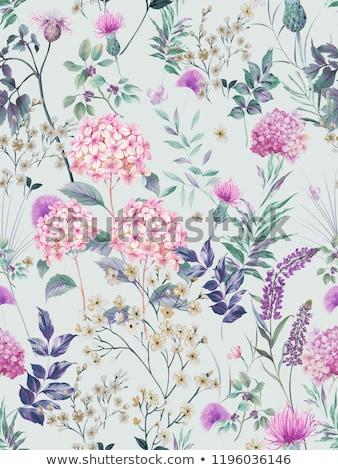 Foto stock: Padrão · violeta · flores · imagem · pequeno · olhando