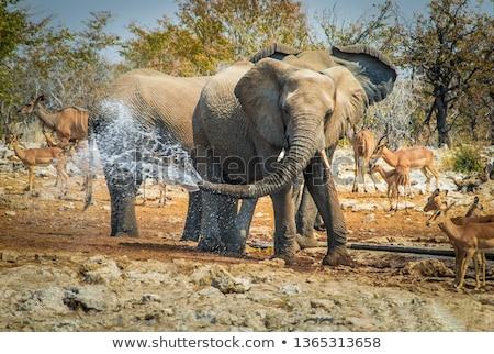 fil · safari · park · aile · seyahat · grup - stok fotoğraf © imagex