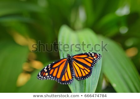 Butterfly in a clearing Stock photo © Olena