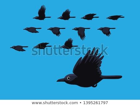 アニメーション 鳥 飛行 黒 鳩 アイコン ストックフォト © Olena
