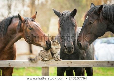 Nice лошади семьи пастбище ребенка природы Сток-фото © digoarpi