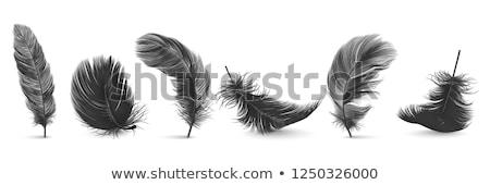 Kaczka czarny Pióro ilustracja charakter tle Zdjęcia stock © colematt