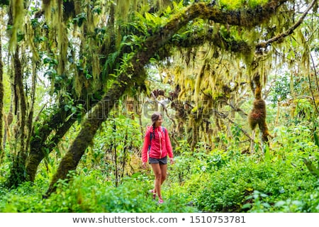 Galapagos tourist walking in Highland forest on Santa Cruz Island in Galapagos Islands Stock photo © Maridav