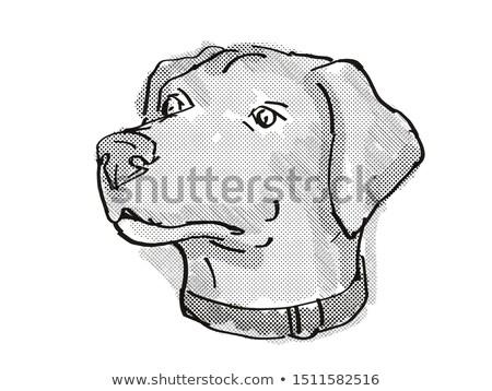 Stockfoto: Blue Lacy Dog Breed Cartoon Retro Drawing