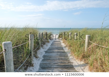chalet · plage · sable · sentier · brosse - photo stock © jsnover