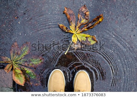 Green leaves and chestnuts  reflecting in the water Stock photo © deyangeorgiev