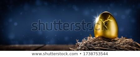 Rachado dourado ninho ovo ameaçado financeiro Foto stock © Balefire9