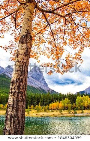 quarry scenery Stock photo © prill
