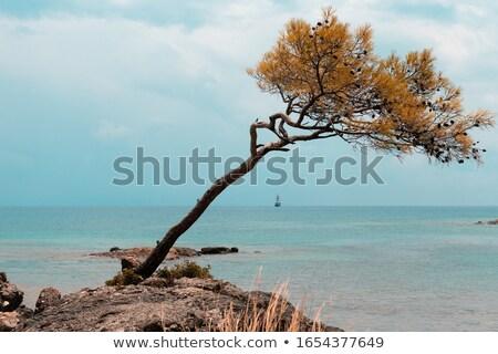 wild Mediterranean coastline Stock photo © smithore