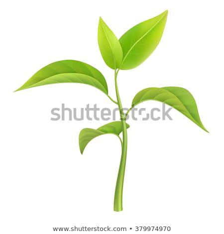 Genç bitki yeni hayat vektör doğa bahçe Stok fotoğraf © experimental