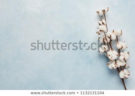Pamuk çim soyut doğa kumaş bez Stok fotoğraf © kuligssen
