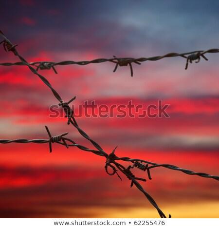 Prikkeldraad veld zonsondergang wolk hek Stockfoto © idesign