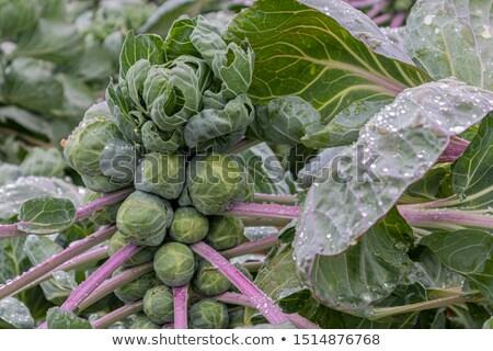 Yeşil bitkiler alan görüntü taze doku Stok fotoğraf © w20er