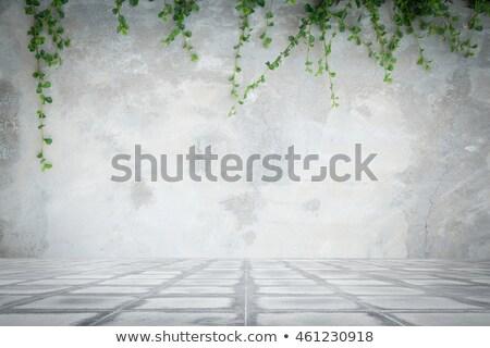 Ivy concrete muro Foto d'archivio © devon