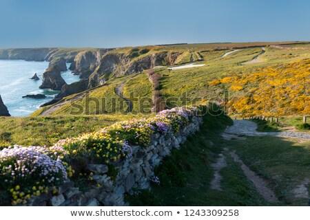 kust · cornwall · Engeland · landschap · zomer · oceaan - stockfoto © chris2766