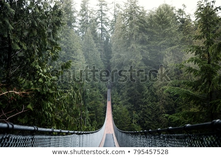 Stock photo: Suspension bridge in the forest