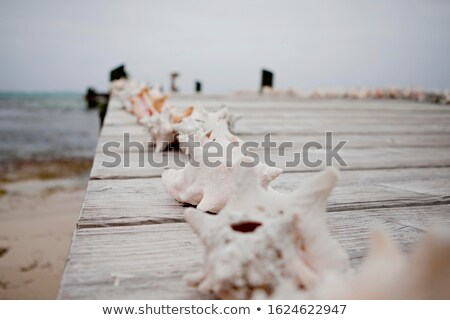 conch on a wooden pier Stock photo © nito