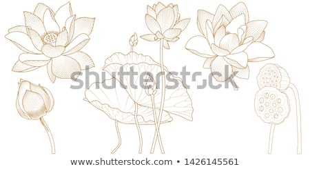 Vektor szett színes körvonal virágok levelek Stock fotó © lissantee