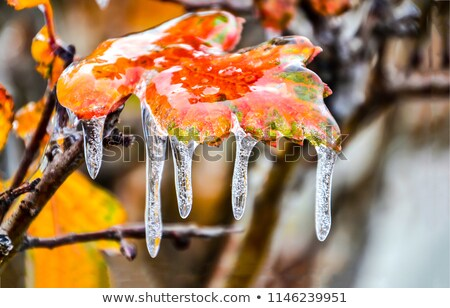 congelada · plantas · prado · backlight · flor · textura - foto stock © simply