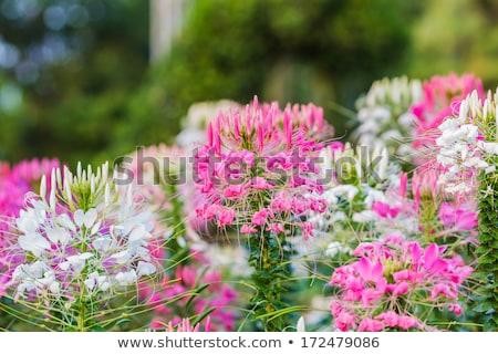 Stock fotó: Pók · virág · növény · természet · kert · zöld