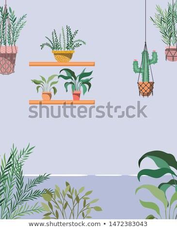Gardening scene with flowerpots on shelves Stock photo © colematt