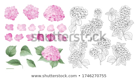 flower violet linear style Stock photo © Olena
